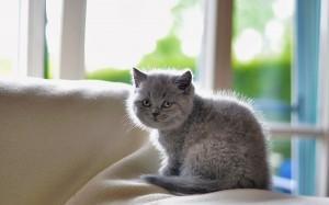 запах мочи кошки на мягкой мебели